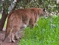 Sheba-March-2011_DSC4199.jpg