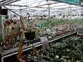 Greenhouse vieuw