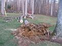 Tree Cut (11)
