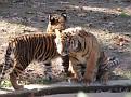 061125 Zoo 1092