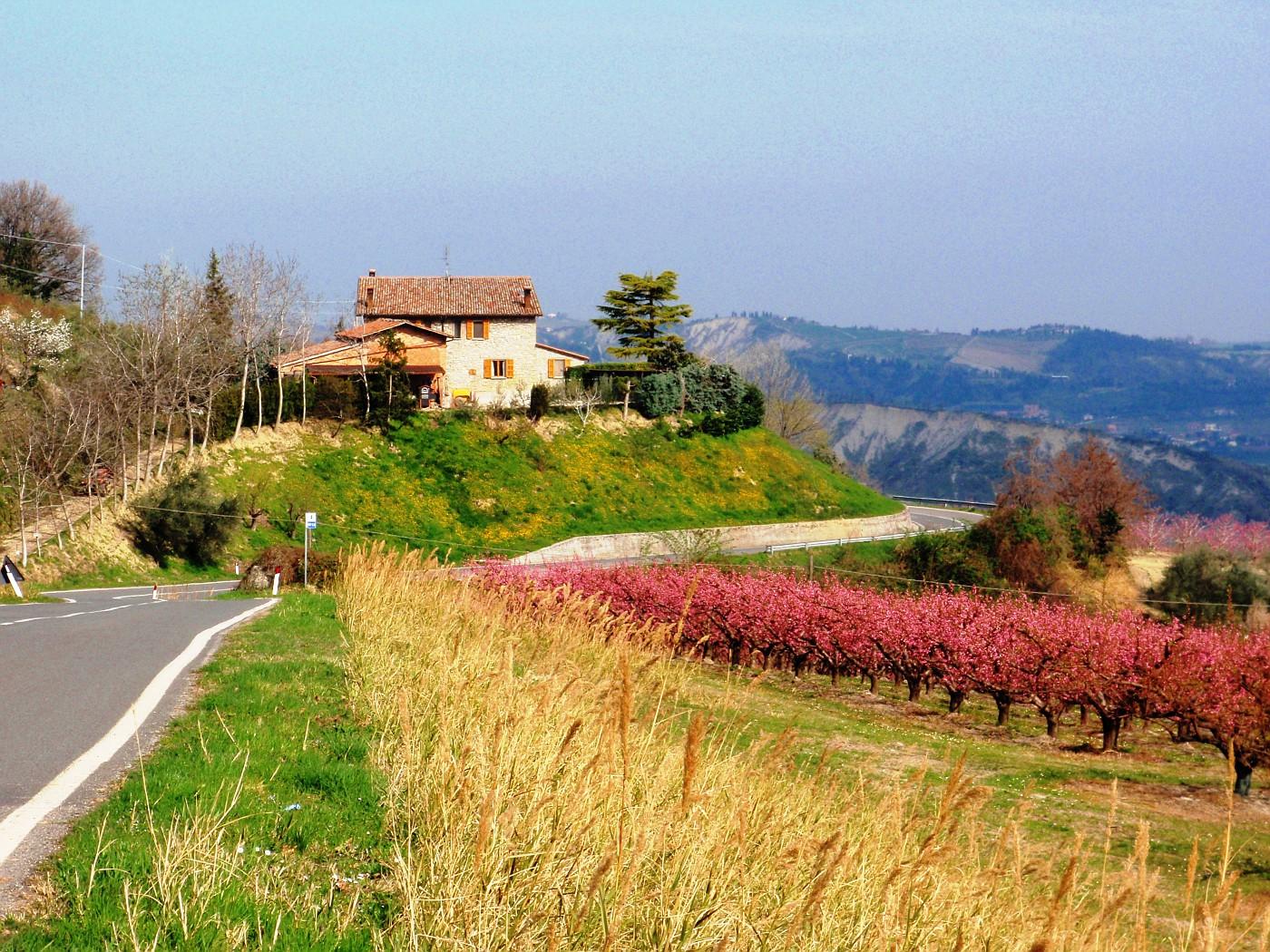Monte Mauro
