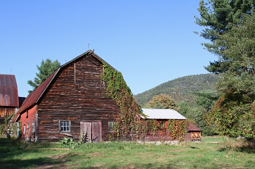 Barn with Vines