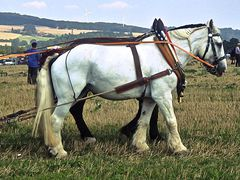 PferdeStark