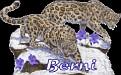 Berni Big Cats2