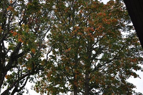 Sügise puu! Keir Einberg