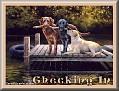 dogshavingfuntjcChecking In