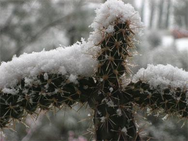 snowcactus7