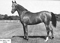 GALI-FERRA #11085 (Ferzon x Gali-Rose, by Galimar) 1956 bay mare bred by Daniel C. Gainey; produced 5 registered purebreds