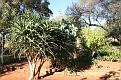 Ivydale Garden Polokwane (6)
