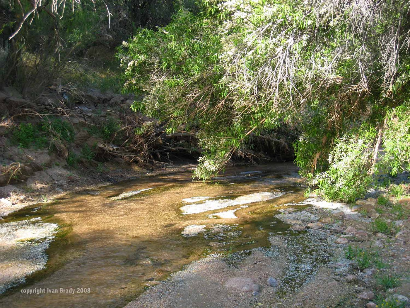 Mesquite Wash0734