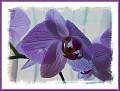 purple pretty