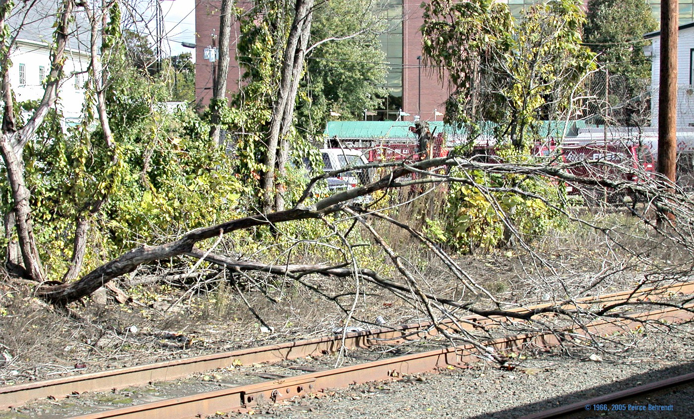 Tree on tracks 1