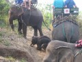 Mae Ping Elephant Camp near Chiang Mai in Northern Thailand Day 12 Feb 23-2006 (19)