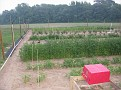 My Garden showing the deer fencing and the irrigation system that I recently built.