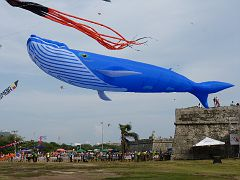 60 foot whale in Cartagena, Colombia