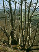 Blick von Niedersachsenwand