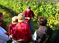 Grape Picking at Natali's Vineyard 10-21-09 (9)
