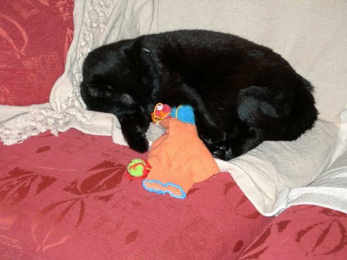 Snoozes with Toys007