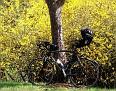 Der Frühling ist sichtbar!