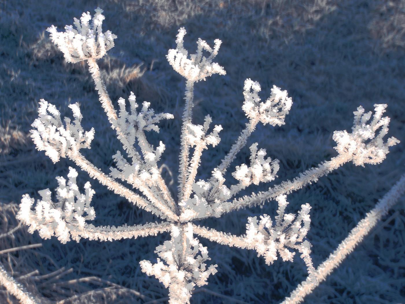 Erste Sonnenstrahlen am frostigen Morgen