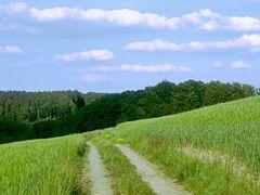 ... durch Feld und Wald