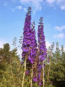 Blütentürme