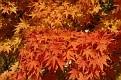 20081018 - NY Botanical Gardens - 21-sm