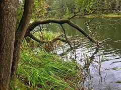 Kuttelbacher Teich